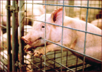 God's Creatures subjected to pain and torture.